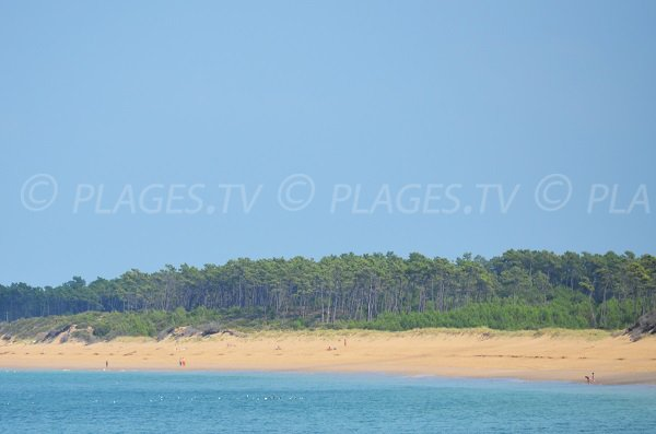 Saumonards beach in Oleron island