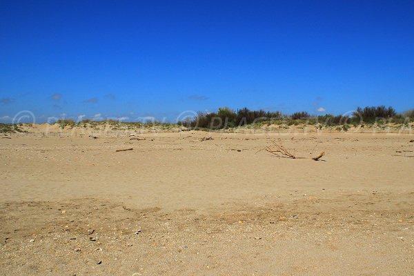 Dunes sur la plage Séoune de Sérignan