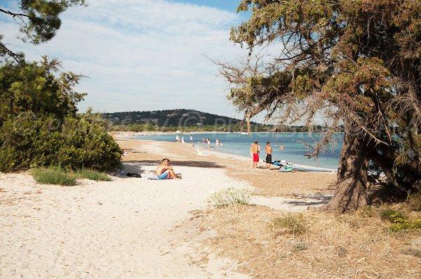Plage Nord de St Cyprien en Corse