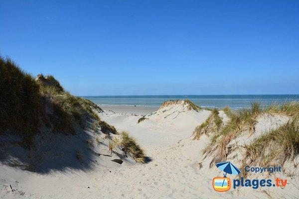 Vue sur la plage Marquenterre depuis les dunes - Baie de Somme