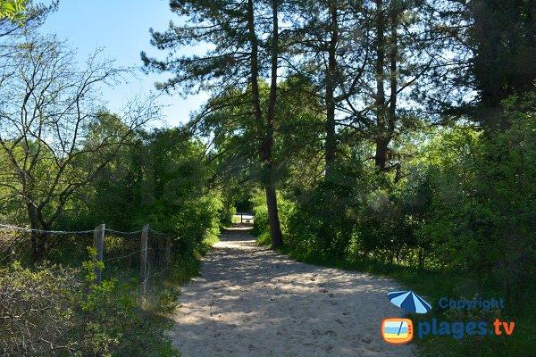 Sentier pour accéder à la plage de Marquenterre