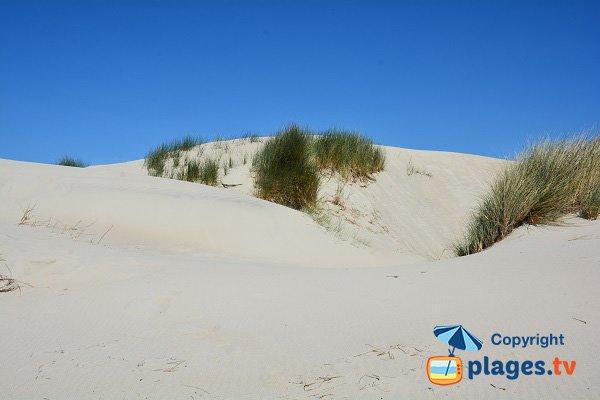 Dunes sur la plage de Marquenterre - St Quentin en Tourmont