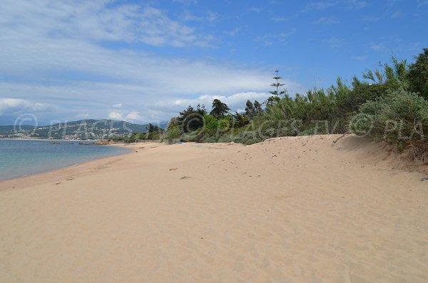 Wild beach in Pietrosella - Olmeta