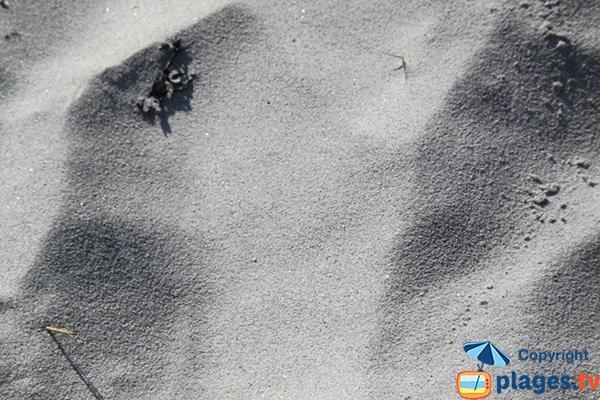 Sand of Staol beach - Santec