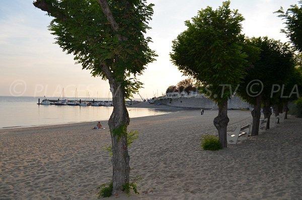 Arbres sur la plage sud de Fouras