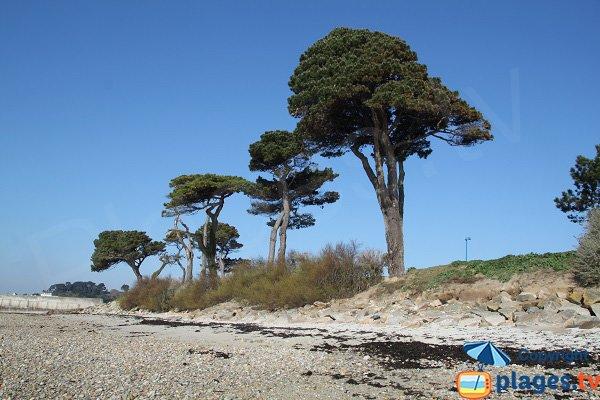 Galets sur la plage de l'ilot de Ste Anne