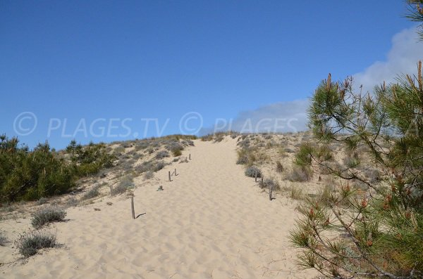Climbing the dune Super South Beach in Lacanau