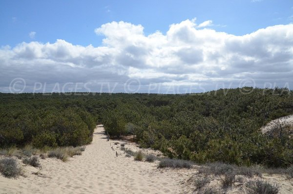 Summit of the dune of Super South beach of Lacanau-Ocean