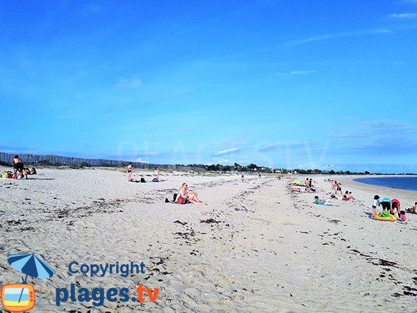 Laisse de mer sur la plage de Sarzeau - Suscinio