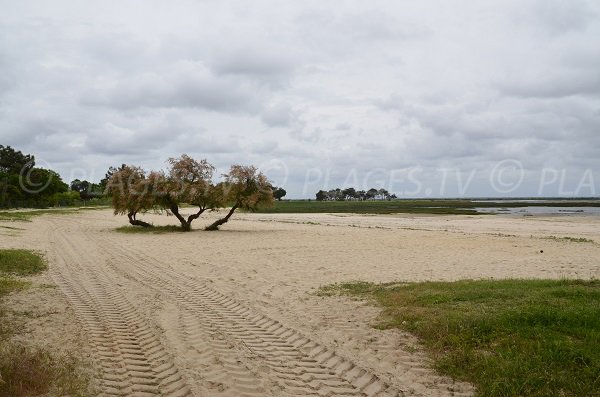 Photo de la plage de Suzette à Lanton