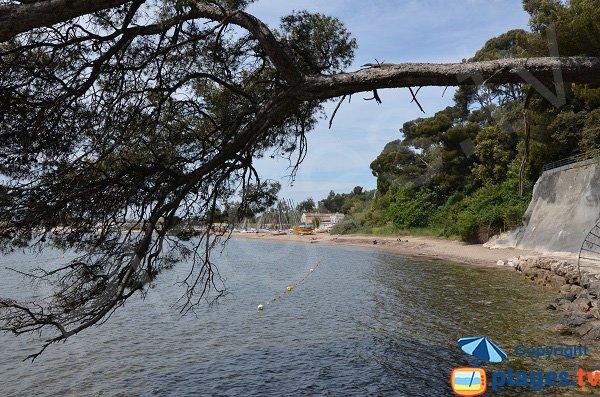 Anse de Tabarly depuis le sentier du littoral - Toulon