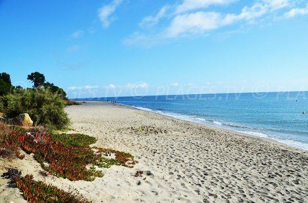 Plage peu fréquentée en haute Corse sur la Costa Verde