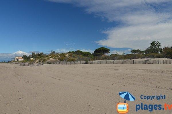 Dunes et forêts de la plage Tamarissière - Agde