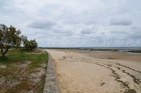 Photo de la plage de Taussat après le port Ostréicole