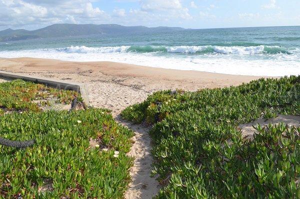 L'accesso alla spiaggia Tenutella a Olmeto
