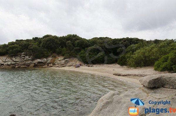 Photo de la plage de Terrori à Figari