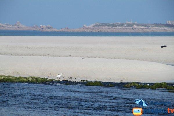 Banc de sable sur l'estuaire à Plougoulm