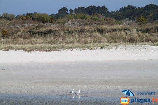 Vue sur la plage de Santec depuis la plage de Plougoulm