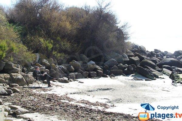 Tamaris sur le bord de plage de Roscoff