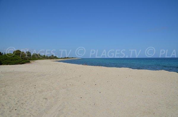 Foto della spiaggia di Travo in Corsica