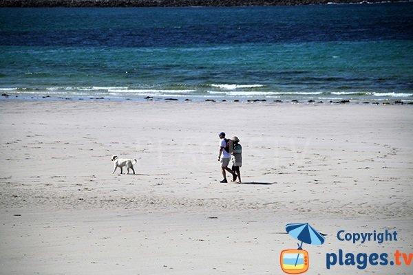 Randonnée sur la plage de Lampaul Ploudalmézeau