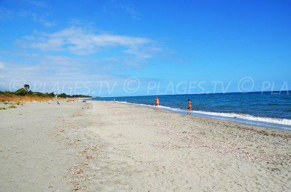 Photo of Tropica beach in Linguizzetta - Corsica