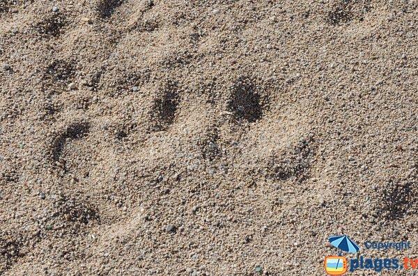 Sabbia di questa spiaggia è grossolana - Trottel - Ajaccio