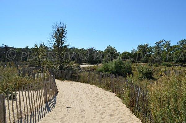 Sentier d'accès à la plage du Bucheron des Portes en Ré