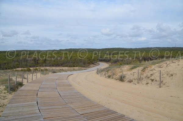 View from the dune of Truc Vert beach on the forest - Cap Ferret