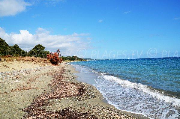Beach environment of Santa Maria Poggio - Corsica