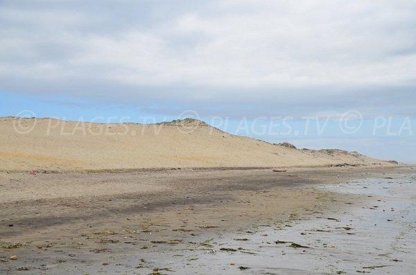Dunes de Vensac en Gironde
