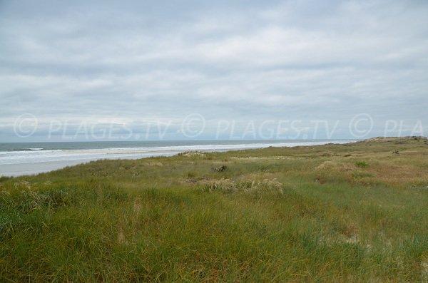Environnement de la plage de Vensac