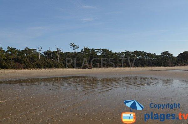 Environnement de la plage des Vergnes - Meschers