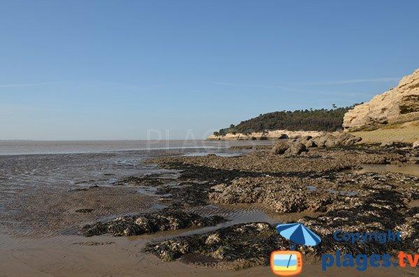 Rochers sur la plage des Vergnes - Meschers