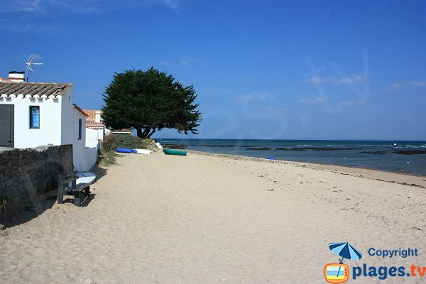 Photo of Vieil beach in Noirmoutier in France