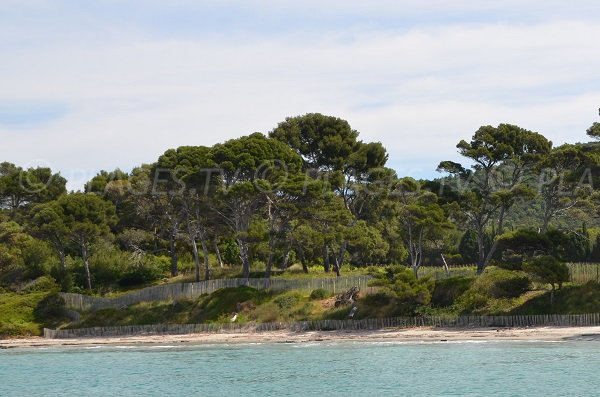 Photo of the Vignasse beach of Bormes les Mimosas