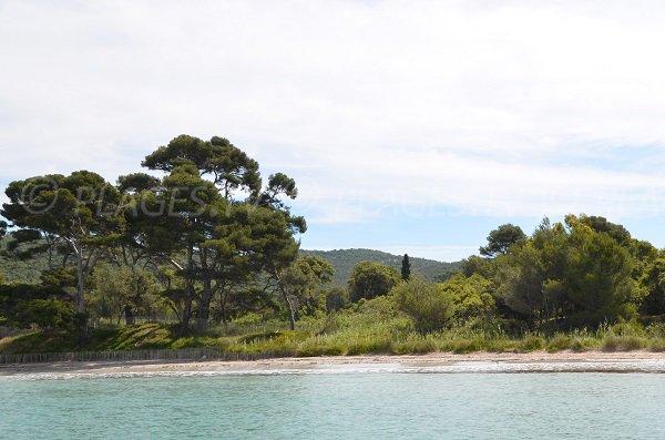 Wild beach in Bormes les Mimosas - Vignasse