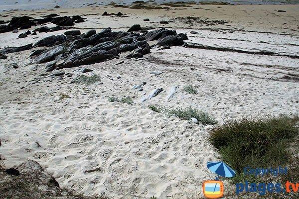 Schiste sur les plages de Plouguerneau