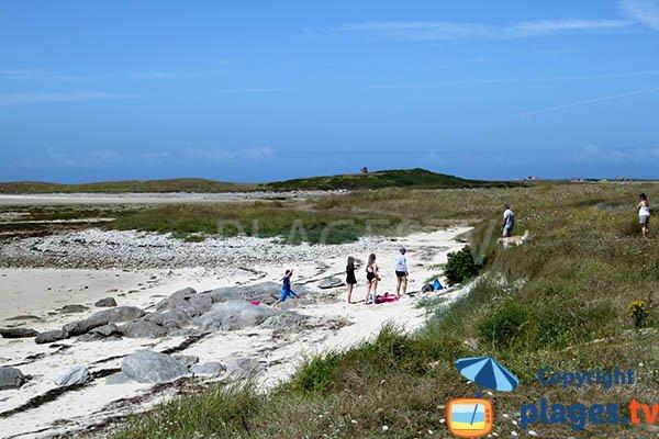 Chiens sur la plage de Plouguerneau