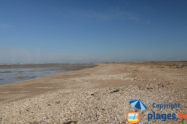 Beach of Marouillet in Yves and view on La Rochelle