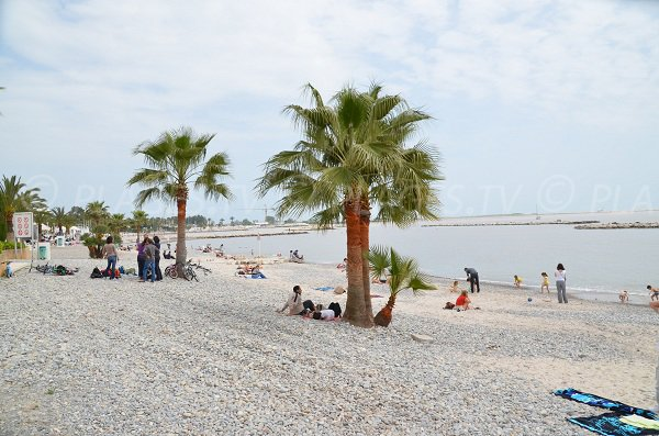 Quelques palmiers sur la plage