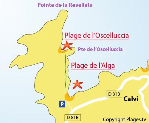 Carte de la plage de l'Oscelluccia à Calvi
