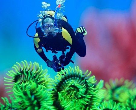 Pratiquer de la plongée sous-marine
