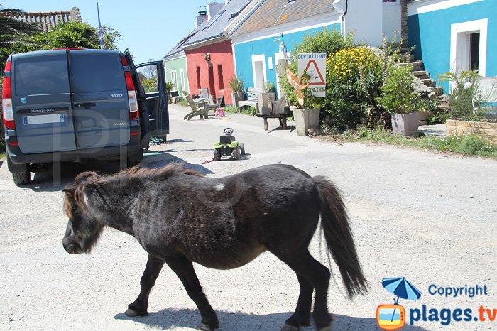 Pony in Belle Ile en Mer