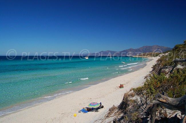 Saleccia - beach in Agriates desert in Corsica