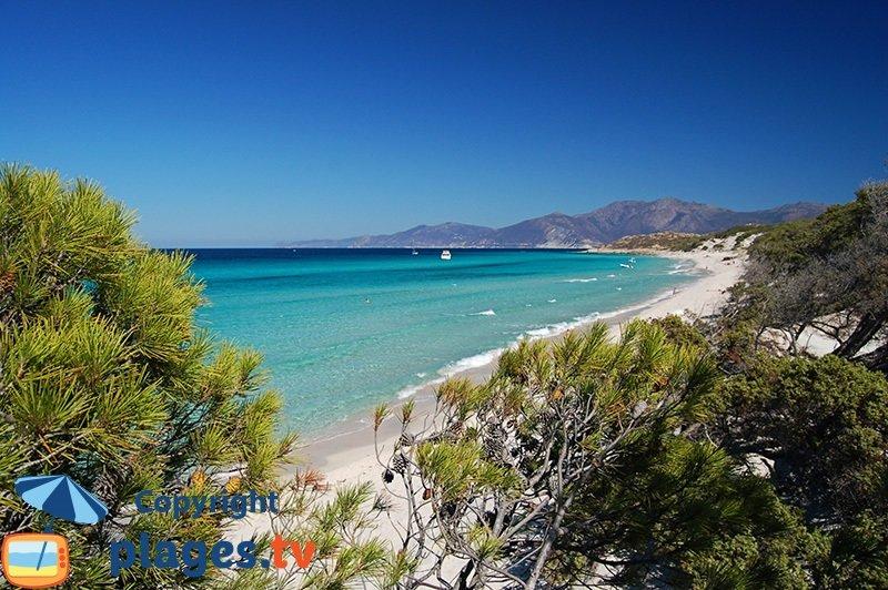 Saleccia : l'une des plus belles plages de Corse