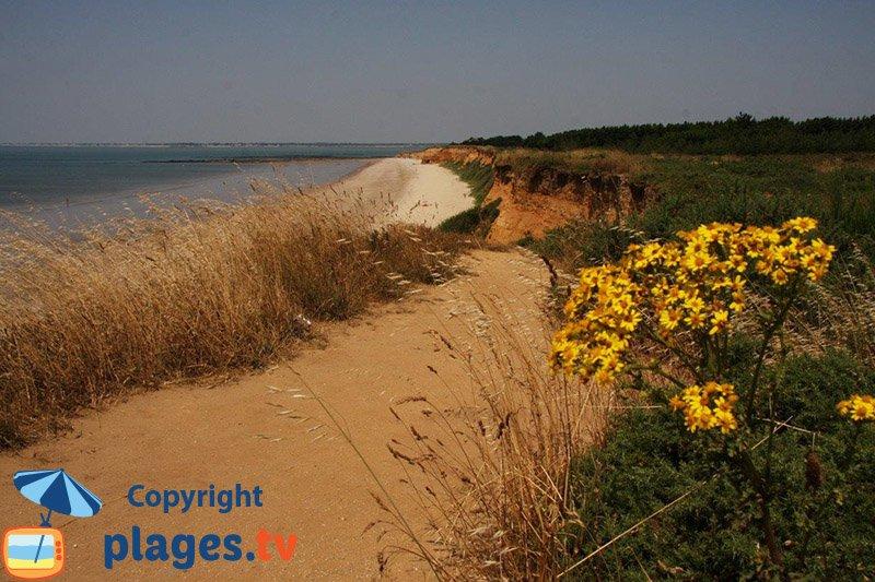 Sentier à Pénestin le long de la plage de la Source