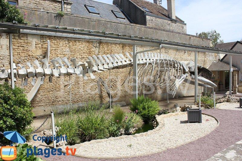 Squelette d'une baleine à Luc sur Mer
