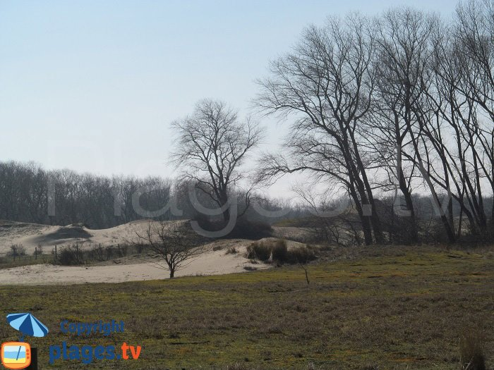 Végétation de la dune de Ghyvelde - Nord
