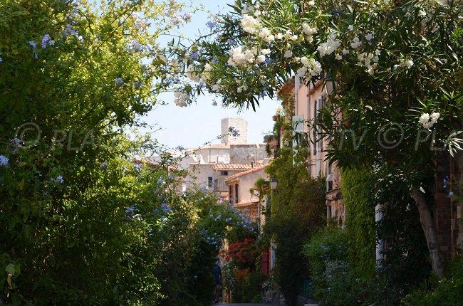 Vieille ville d'Antibes - quartier du Safranier